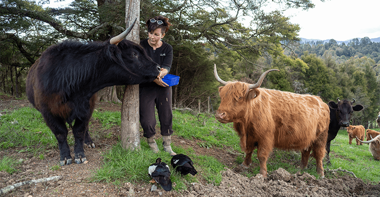 Lisa Grennell with her rescue cows